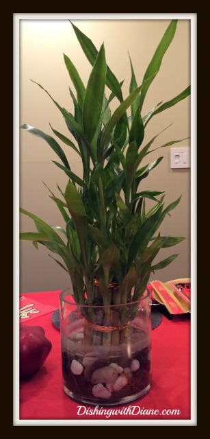 2015-02-18 20.46.15 - bamboo plant