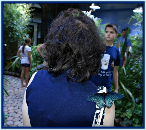 October 2011 200- butterfly on shoulder