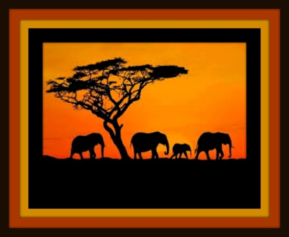download- AFRICAN SAFARI