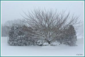 2016-01-23 16.22.11 snow 2