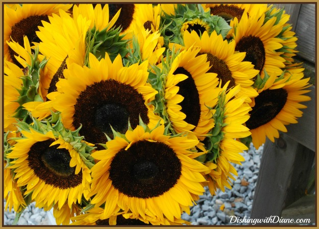 dsc_0657-sunflowers-for-blog