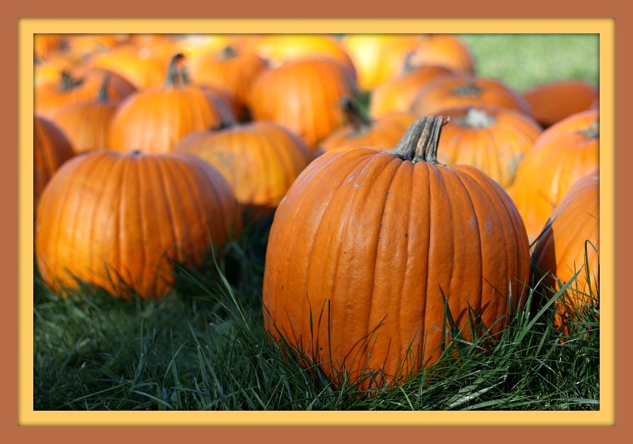 pumpkin-for-blog