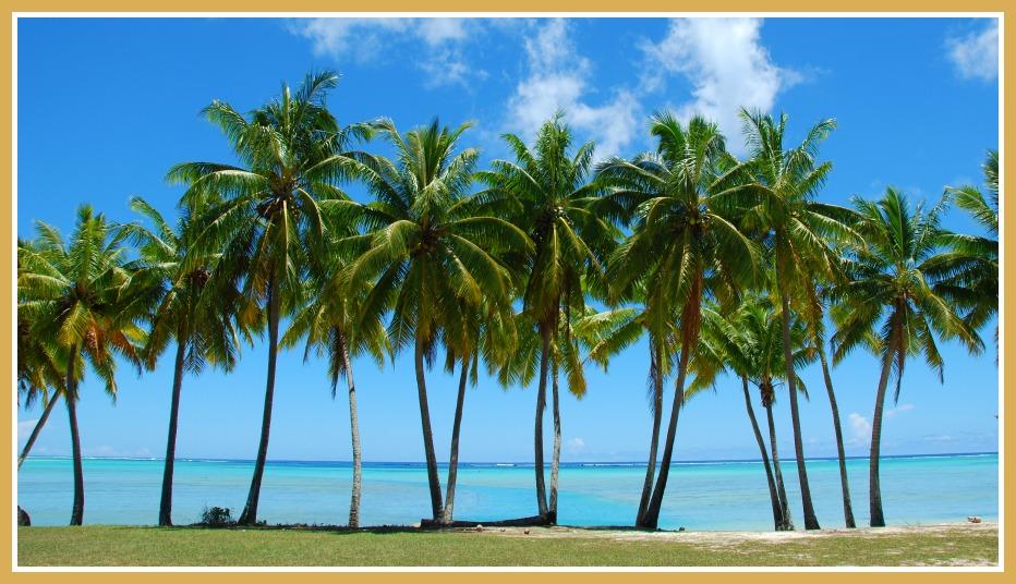 palm-trees-beach- thetreecenter - blog