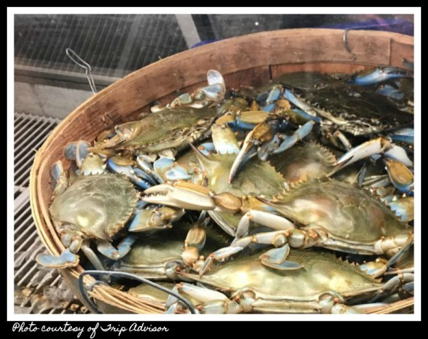 live-soft-shell-crabs in bucket 2