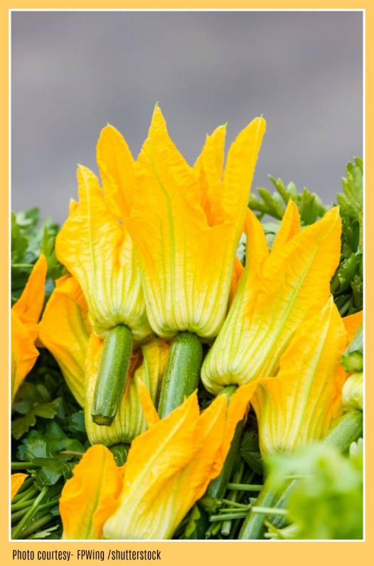 FEMALE ZUCCHINI FLOWER